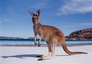 жить в австралии