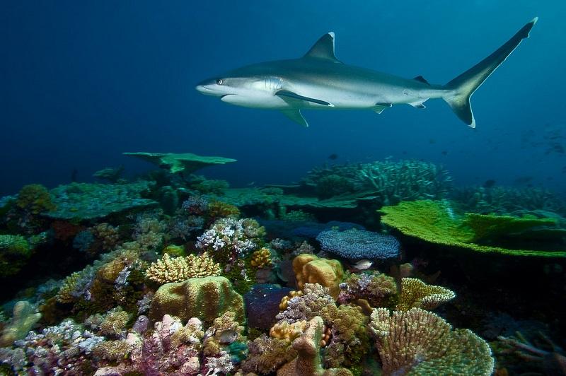 Подводный мир барьерного рифа