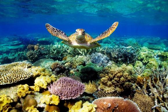 моря омывающие Австралию