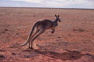 дикая природа Австралии фото