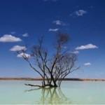 Экология Австралии