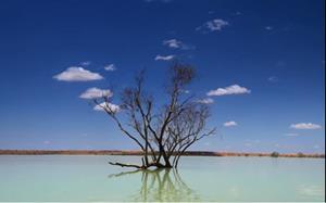 Avstralia_ekologia