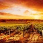 Путешествие в Южную Австралию